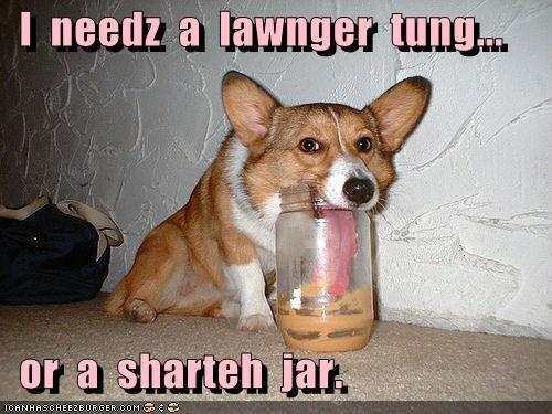 Cheezburger Image 4035436544