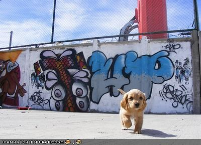 cyoot puppeh ob teh day,didnt-do-it,drawing,faking it,golden retriever,graffiti,innocence,lying,puppy