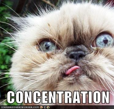 caption captioned cat concentration crazy eyes derp face Hall of Fame LOLs To Go tongue - 4036179968