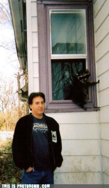 Animal Bomb animals climbing implications photobomb raccoons theft - 4036180224