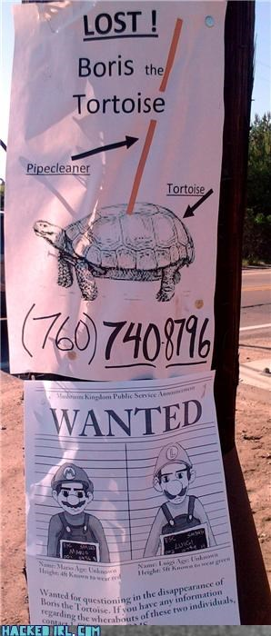 Missing Turtle...Or is it?