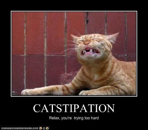 CATSTIPATION Relax, you're trying too hard