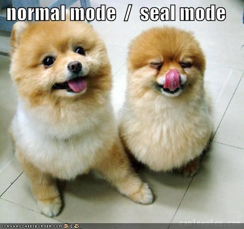 cute,Hall of Fame,mode,mode change,normal,pomeranian,seal,tongue,transformer,two