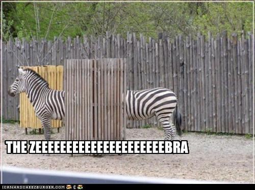 caption,captioned,funny,long,optical illusion,two,zebra,zebras