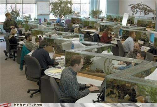 awesome,cubicle decor,fish tank,Office