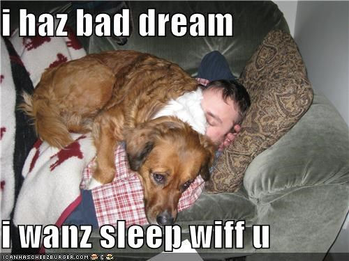 bad dream,cuddling,golden retriever,human,mixed breed,question,sleep,with you