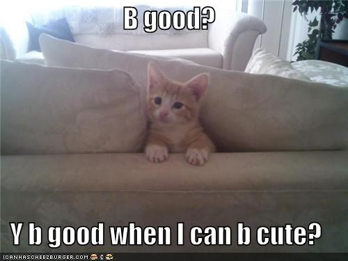 be good better option caption captioned cat couch cute kitten question trouble why - 4037958144