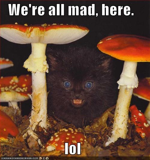 alice in wonderland,caption,captioned,Hall of Fame,here,kitten,lol,mad hatter,Mushrooms