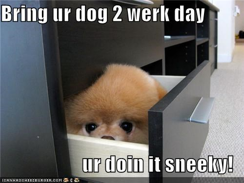 bring your dog to work day,doing it right,file cabinet,filing,Hall of Fame,hiding,pomeranian,puppy,sneaky,squee,working
