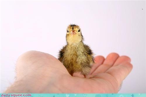 baby bird quail - 4038220032