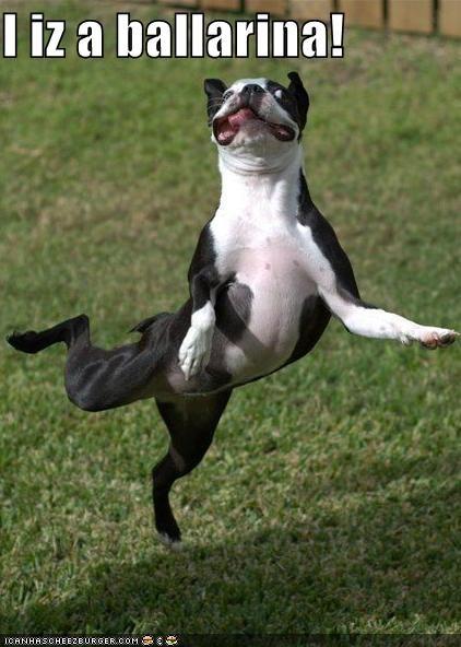ballerina critters dancing derppp dogs iz iz a word tiny - 4038377728