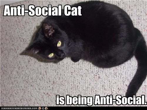 8ef363535 Anti-Social Cat - Cheezburger - Funny Memes