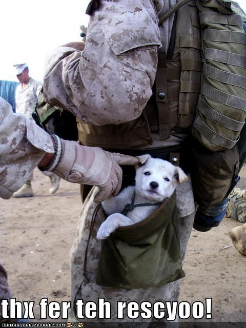 carried cute drop pouch following found Hall of Fame heartwarming kind-hearted people marines puppy rescued touching whatbreed