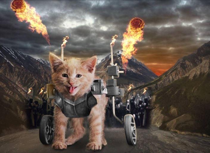 a cute photoshop battle of a kitten in a wheelchair