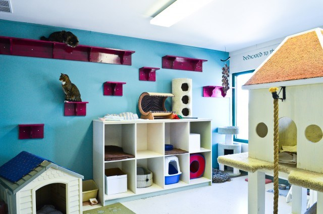ideas for cat rooms