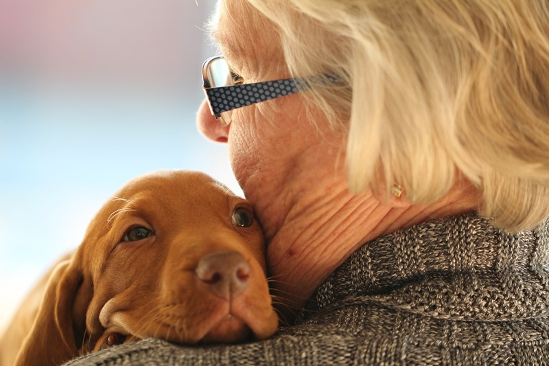 new research about the affect of dog ownership on health