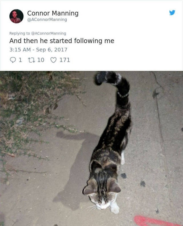 a funny story of a guy that adopts a street cats
