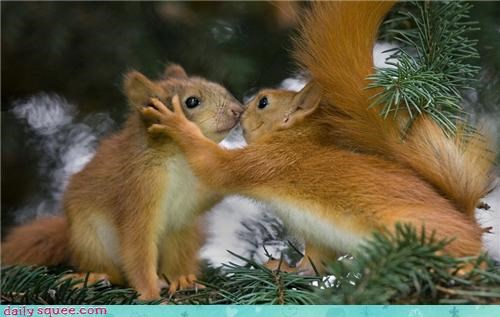 face,KISS,squirrel