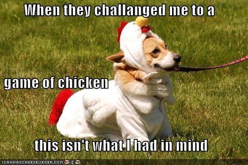 Cheezburger Image 4040548352