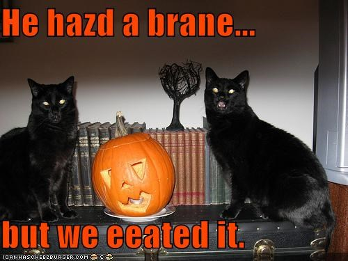 black brain caption captioned cat Cats halloween i eeted it meowloween oops pumpkins - 4041150720