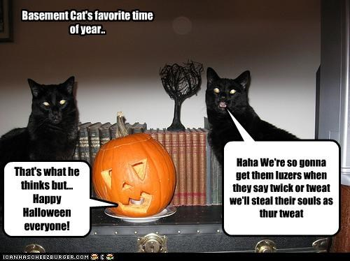 Basement Cat's favorite time of year.. Haha We're so gonna get them luzers when they say twick or tweat we'll steal their souls as thur tweat That's what he thinks but... Happy Halloween everyone!