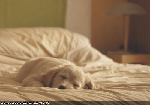 bed cute cyoot puppeh ob teh day nap time napping puppy sleeping - 4041432320