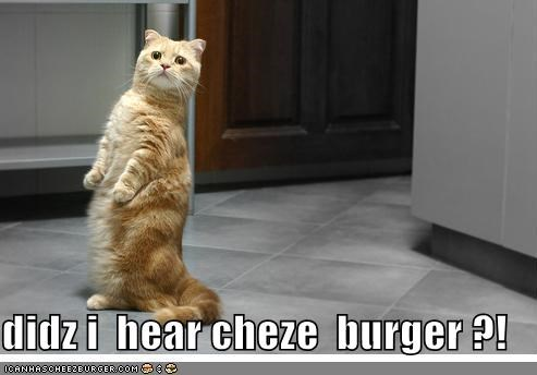 Cheezburger Image 4041447936