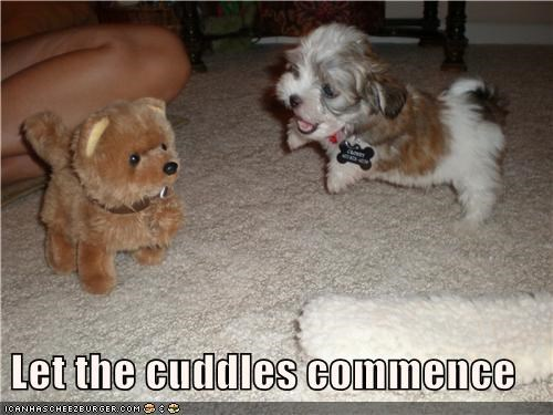 commence cuddles cuddling happy mixed breed puppy stuffed animal terrier tiny - 4041547008