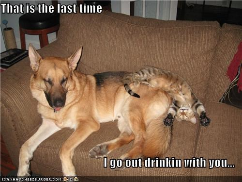 cat drinking german shepherd Hall of Fame partying promise rough night the last time too hard