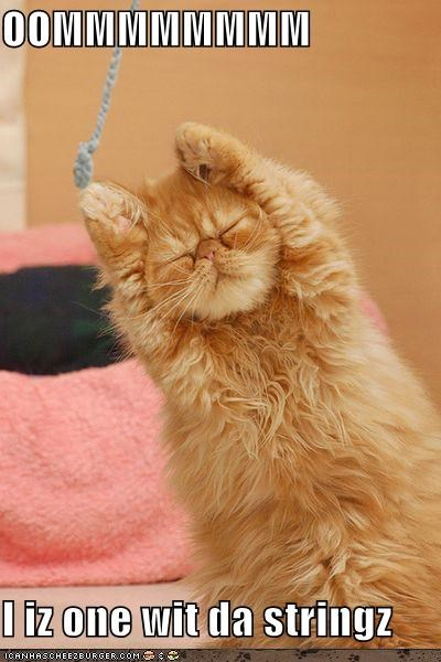 be one with caption captioned cat concentrating cute eyes closed meditating om stretching the string yoga