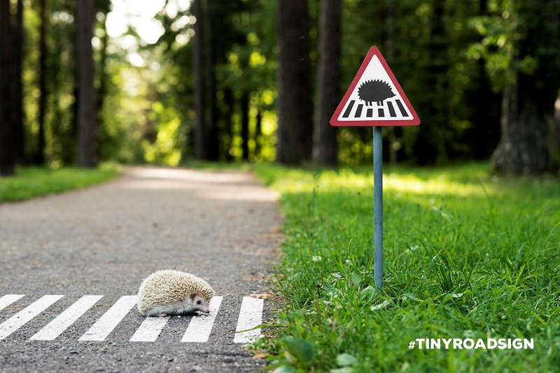 tiny road signs for animals