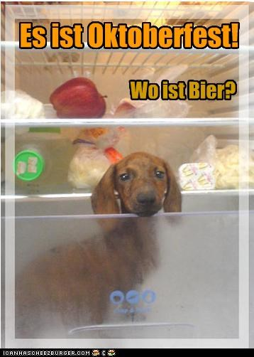 Cheezburger Image 4042052608