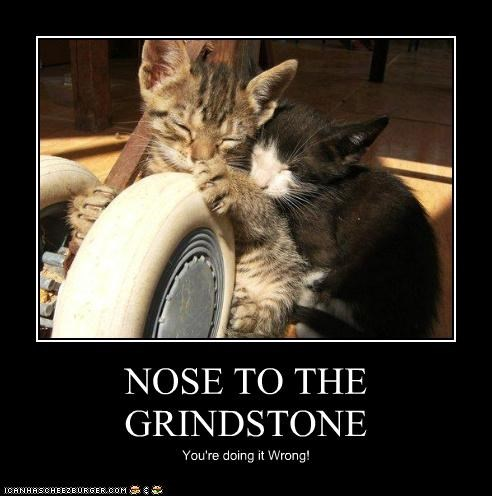 funny demotivational cat meme poster about putting the nose to the grindstone