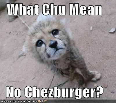 Cheezburger Image 4042384640