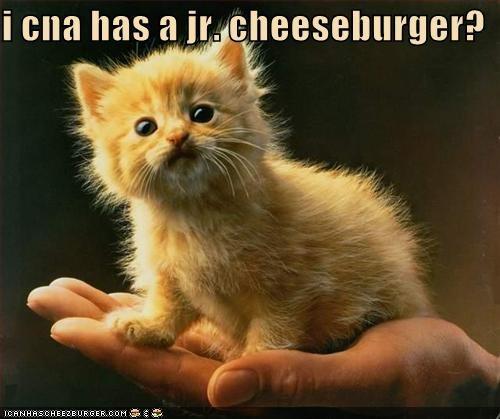 Cheezburger Image 4042584576