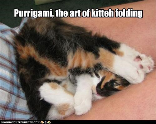 art form bent caption captioned cat contortion folding Hall of Fame kitteh LOLs To Go origami paper folding purrigarmi