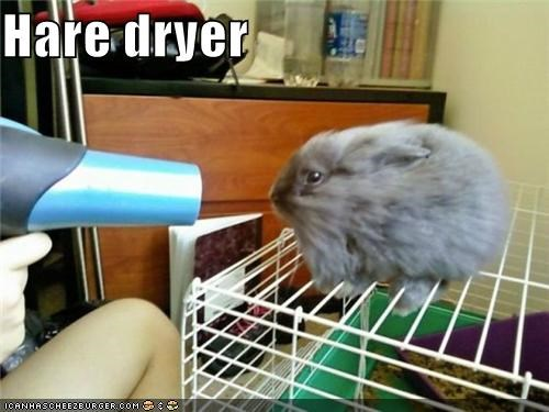 blowdryer,bunny,caption,captioned,cute,hair dryer,hare,pun,rabbit