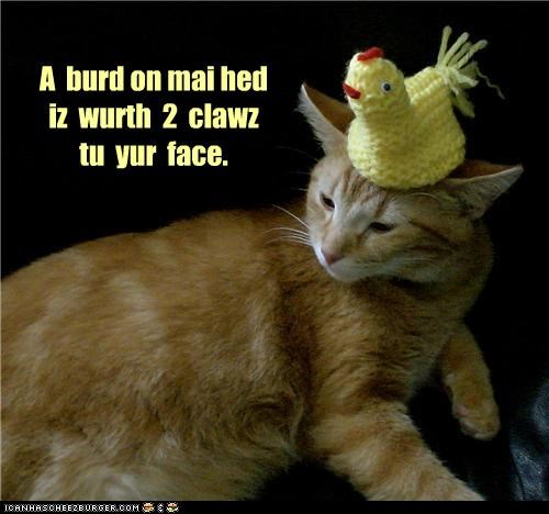 adage annoyed bird caption captioned cat claws face head toy value - 4043224576