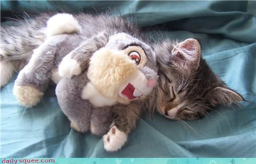 doll,Fluffy Friday,kitten,thumper