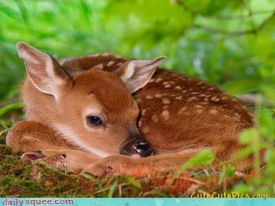 baby deer doe - 4045370880