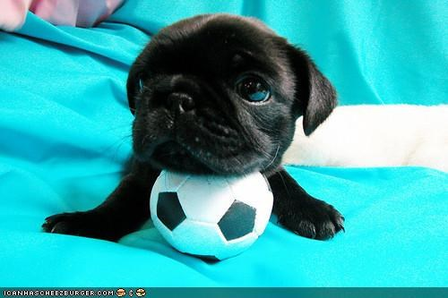 ball cute cyoot puppeh ob teh day happy mine possession smiling whatbreed - 4045642752