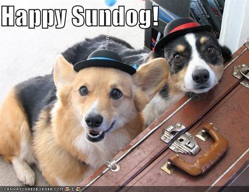 bowler hats,corgi,happy,happy sundog,luggage,pembroke corgi,trip,welsh corgi