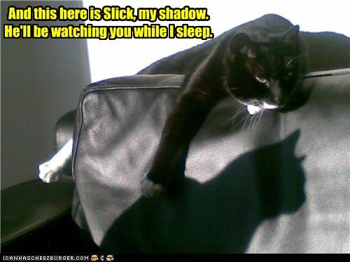 caption captioned cat fyi introducing introduction shadow sleeping slick task - 4046002176