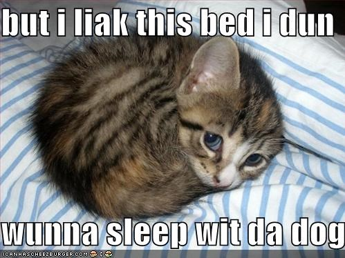 bed caption captioned cat do not want i like this kitten pouty eyes sad face sleep with dog - 4046293504