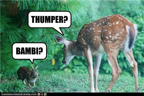 bambi,bunny,caption,captioned,deer,recognition,reunion,thumper