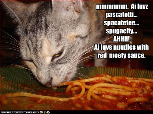 caption captioned cat FAIL love meaty noms noodles Pronunciation red sauce spaghetti - 4047779072