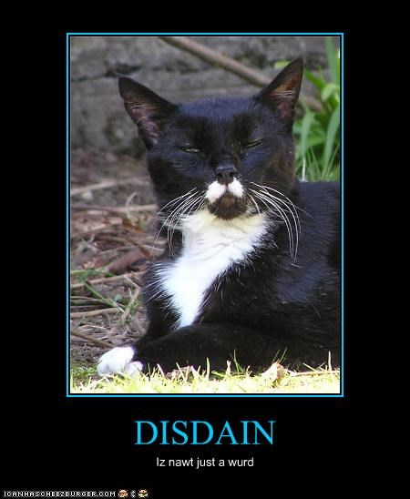 angry caption captioned cat deeper meaning disdain glaring more not just a word upset - 4047794176