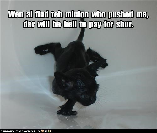 basement cat,caption,captioned,cat,kitten,minions,prank,pushed,revenge