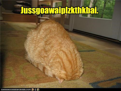 ball caption captioned cat curled up floor Hall of Fame head hiding kthxbai request - 4048116992