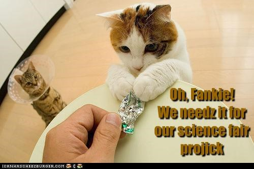 Oh, Fankie! We needz it for our science fair projick